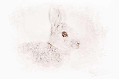 1987年属兔2019年运势_属兔2019年运势的风水吉凶来了解下