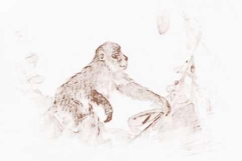 九二年属猴2019运势_属猴2019年运势的风水吉凶来了解下