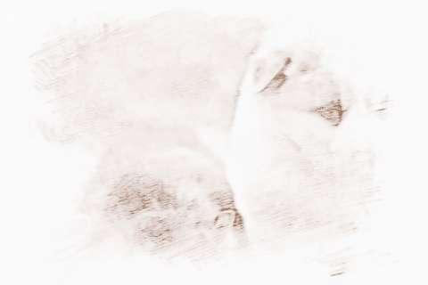 [1982年属狗2019年运势]属狗2019年运势的风水吉凶来了解下