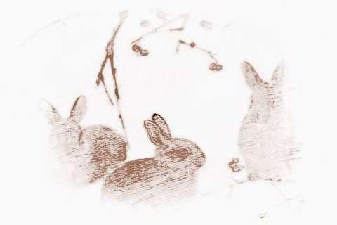 宋韶光属羊的人2019年运|宋韶光2019年属兔运程及每月运势