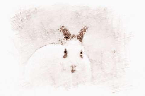 [生肖兔2019年运势大全]2019年3月生肖兔运势及运程