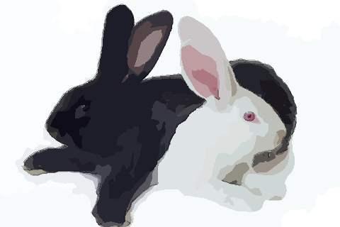 属兔人2021年佩戴什么开运吉祥物:猪兔迎福