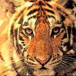 1998年属虎考研最佳方向,98年属虎人2022考研会成功吗