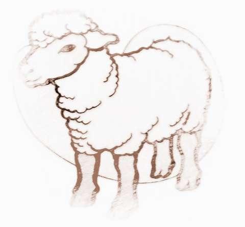白羊座女的性格特点_属牛白羊座女性格特点