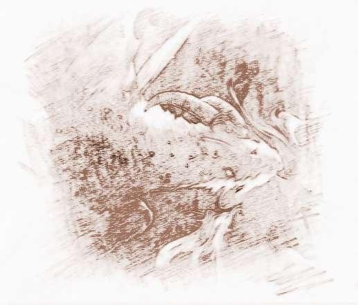 摩羯座的分手星座金牛座男配对后图片