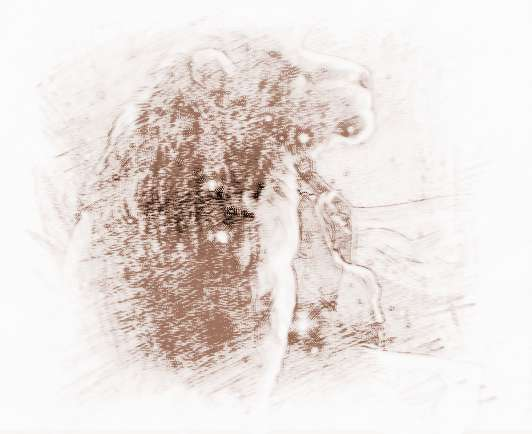 狮子座最配星座圣斗士巨蟹座双鱼座图片