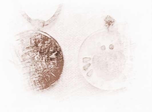 【海百合化石】海百合2017年8月巨蟹座运势