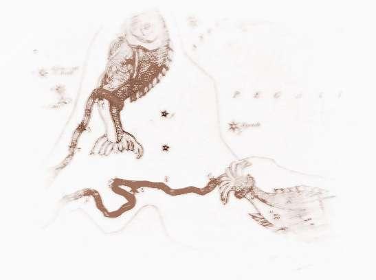 双鱼座a型血男生性格_A型血的双鱼座性格分析