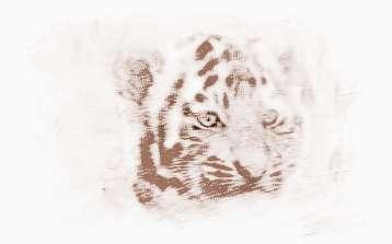 有哪些属虎起名常用字