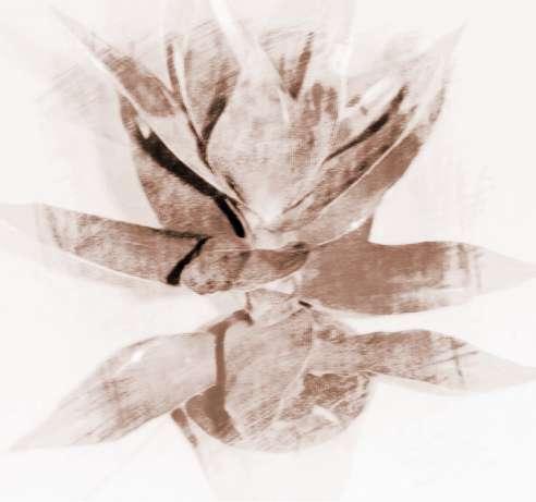 观音竹的养殖方法和注意事项