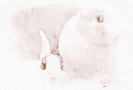 屬兔的屬相婚配表