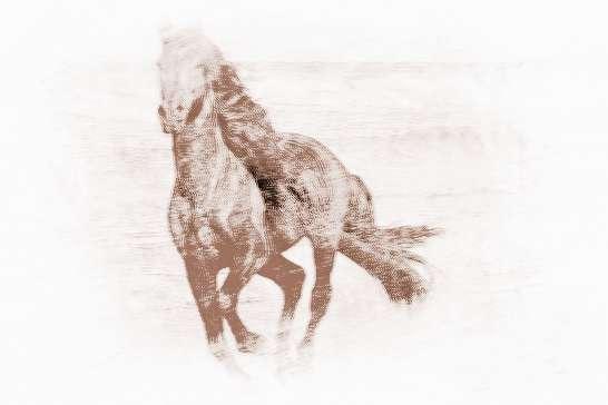 属马的属相婚配表