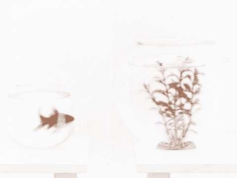 户金鱼缸风水摆设的考究