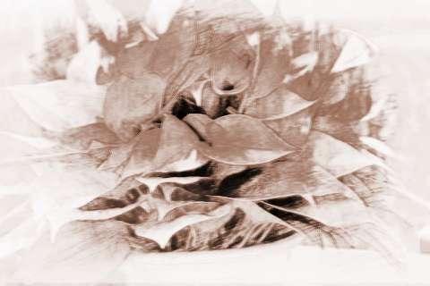 【什么植物招财】四种植物招财又旺宅,财源滚滚的风水