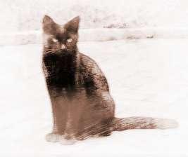 梦见黑猫咬我腿