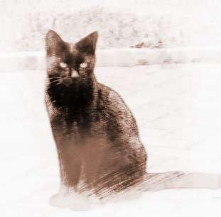 梦见黑猫咬人