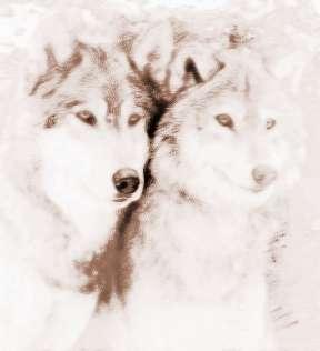 梦见很多狼