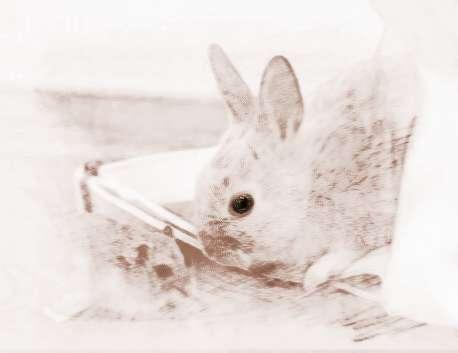 梦见灰兔子 周公解梦之梦到灰兔子
