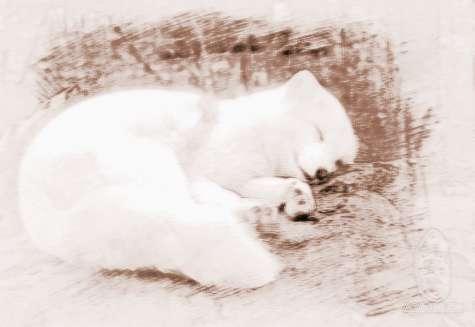 梦见白色狐狸 周公解梦之梦到白色狐狸
