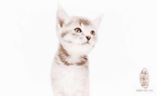 梦见小猫崽 周公解梦之梦到小猫崽