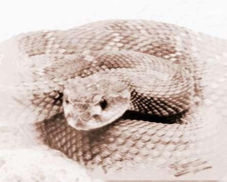 梦见长蛇追 周公解梦之梦到长蛇追