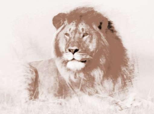 做梦狮子 做梦梦到狮子
