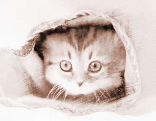 做梦让猫咬 做梦被猫咬到手