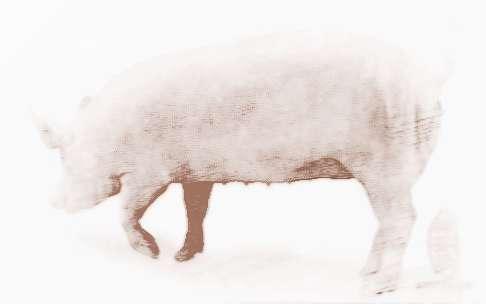 梦见猪和人说话