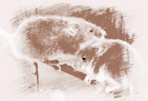 动物牙疼图片大全可爱