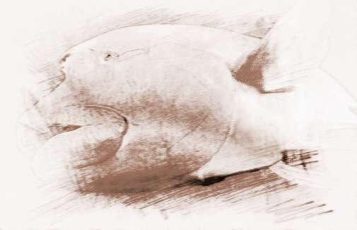 梦见死鱼和活鱼在水里