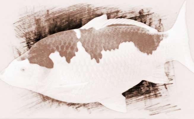 做梦梦见鱼变龙