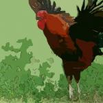 夢見自己抱著公雞