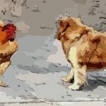 夢到雞和狗打架