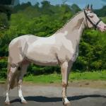 夢到一匹綠色的馬