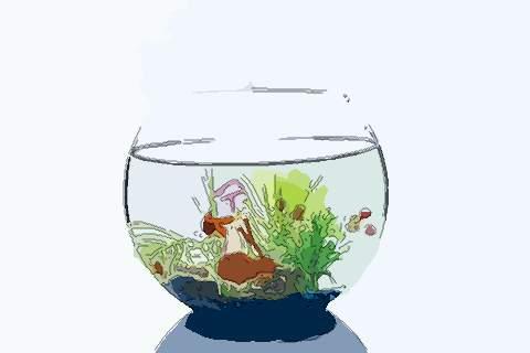 梦见圆形鱼缸 周公解梦之梦到圆形鱼缸