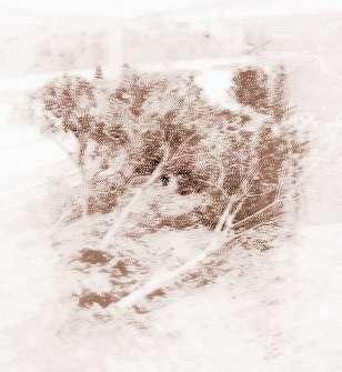 梦见树倒了