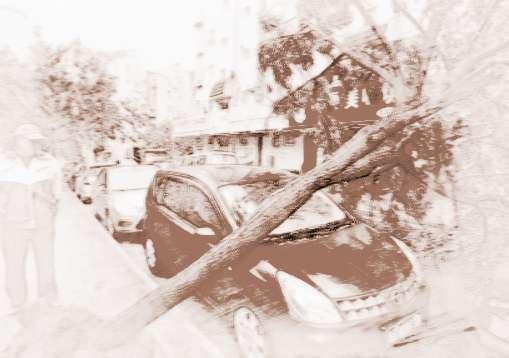 梦见树倒了 男人梦见大树倒了