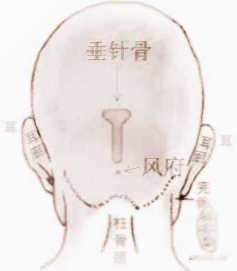 骨相学--垂针骨