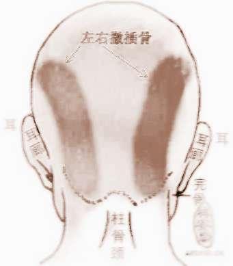 骨相学--左右撒插骨