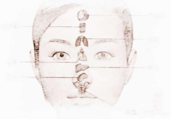 额头。额上发黑:前脑叶的变化表现在额部,因此,该处发现紫黑色斑点是病情严重的表现。额部污浊有斑点:子宫有病,或肺有病变。额头上部晦暗、无光泽:有可能是肾脏病的征兆。额头皱纹突然增加:肝脏负担过重,要少吃动物脂肪,多吃清淡的食物。额头与别的部位不同的地方在于,不同的区域代表不同的脏器机能。两眉中间为脑反应区。如果脑区出现1字纹,11字纹,111字纹,这属于用脑过度,脑循环不畅。长时间下去,脑部缺氧会引起头疼、偏头痛、记忆力下降等症状。如出现凹陷,属于脑供血不足,这实际与心供血不好有直接关系。靠近发迹三分之一