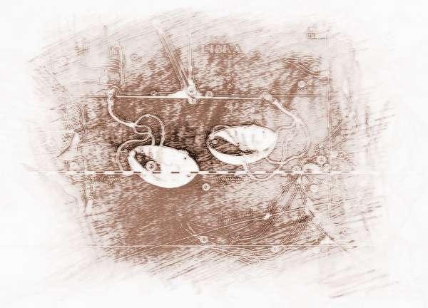 狮子座和天秤座的配对运势_祥安阁12星座配对96年巨蟹座今日指数图片