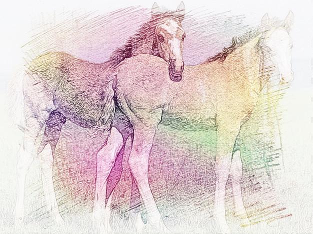 四马倒攒蹄图片欣赏,四马倒攒蹄捆绑,四马倒攒蹄 ...