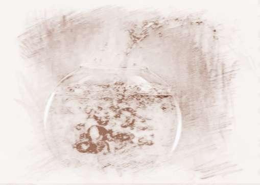 使用着的商铺玻璃鱼缸摆放位置风水图