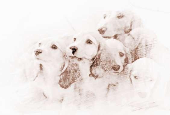 属狗的年份有哪些?在2018年运势较差的生肖有哪些?