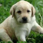 属狗的人今年多大了2021 2021年属狗人多少岁