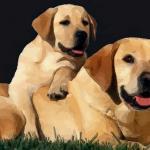 属狗人什么时候出生命最好 属狗人哪天出生命运好