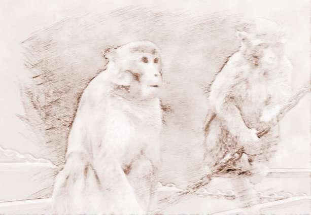 属猴的人在属猴的年龄_属猴的人在属猴的年份运势不佳?属猴人2018年运势好吗?