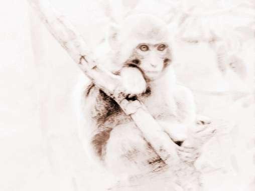[属猴的年份有哪些属猴的人在2015]属猴的年份有哪些?属猴的人在2018年运势好不好?