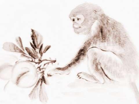 2018年属猴的人怎么转运