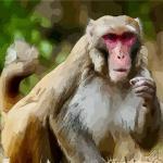 生肖猴今年如何轉運氣?把握時機是關鍵
